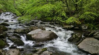CHEROKEE, NC - MAY 11:  The Oconaluftee River flows at a high rate of speed during the spring runoff on May 11, 2018 near Cherokee, North Carolina. The Great Smoky Mountains National Park straddles the Tennessee and North Carolina borders in the heart of the Appalachian Mountain Range. (Photo by George Rose/Getty Images)