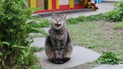 강동구청 노조가 구청 옥상 고양이 쉼터의 이전을