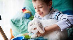 Un projet de zoothérapie bientôt lancé à l'hôpital d'enfants de