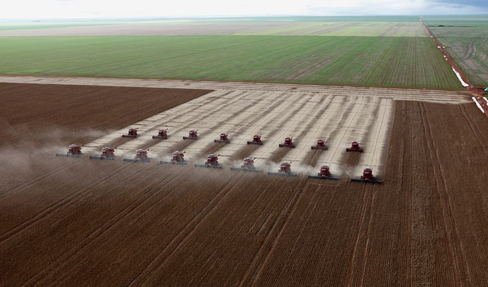 Workers harvesting soybeans in Cuiaba, Brazil. Intensive monoculture farming — growing a single crop over a large