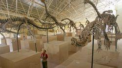Σε αποτυπώματα δεινοσαύρων εργάζονται Έλληνες και Κινέζοι