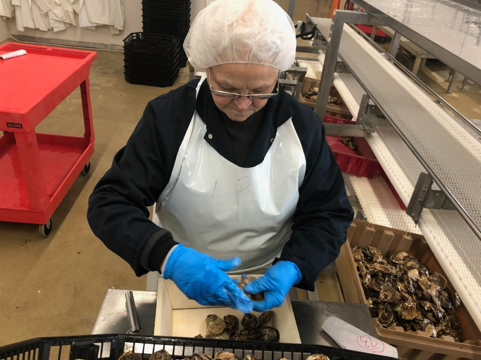 Leola Plourde is over 60 years old and belongs to an older cohort of shellfish packers.