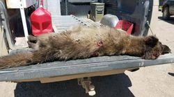 USA: Jäger erlegt wolfsähnliches Tier –Experten wissen nicht, was es ist