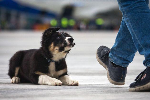 Συγκινητική στιγμή μιας σκυλίτσας που γεννά σε