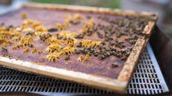 Μυστήριο με 34χρονο που είπαν πως πέθανε από μέλισσα. Ωστόσο, δεν βρέθηκε σημάδι από