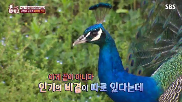 시골 마을 주민들이 애지중지 예뻐하는 동물의 놀라운 정체