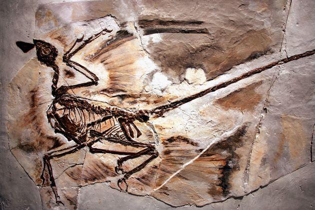 이 비듬 화석은 1억2500만년 전 살았던 공룡의