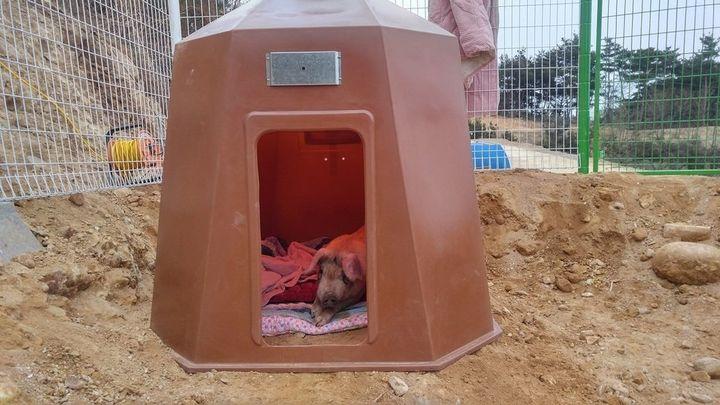 동물복지농장에서 만들어준 삐용이의 아늑한 보금자리. 전열기구로 인해 안은 따뜻했다.<br>