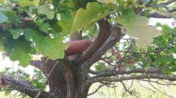 Ein Landwirt entdeckt einen ungewöhnlichen Gegenstand in einem Baum – er ruft sofort die Polizei