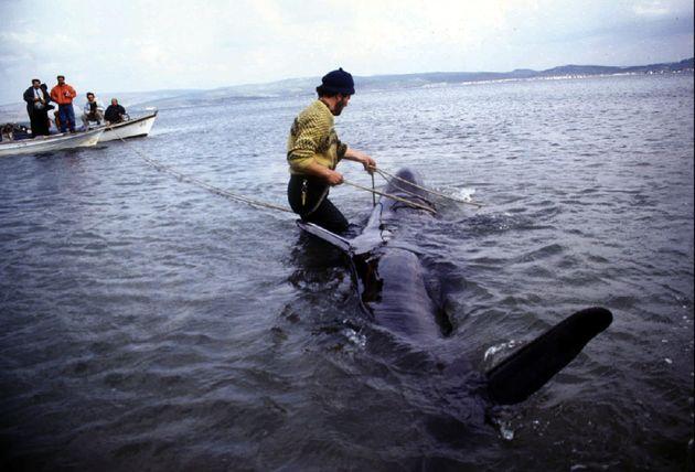 Πώς μία σακούλα από ένα μαγαζί με κεμπάπ στη Θεσσαλονίκη, σκότωσε φάλαινα στη