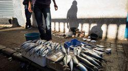 Boycott: pourquoi le poisson est actuellement si