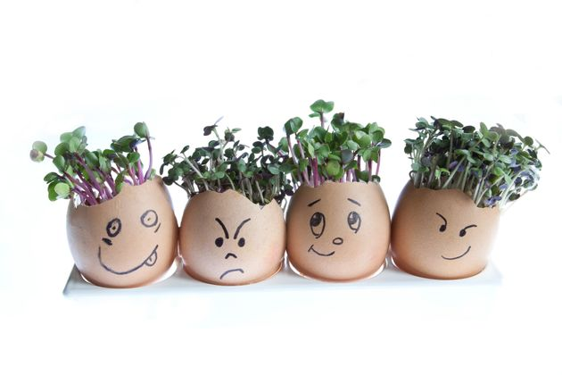 Whether you have a garden, a balcony or a windowsill, choose something to plant and grow
