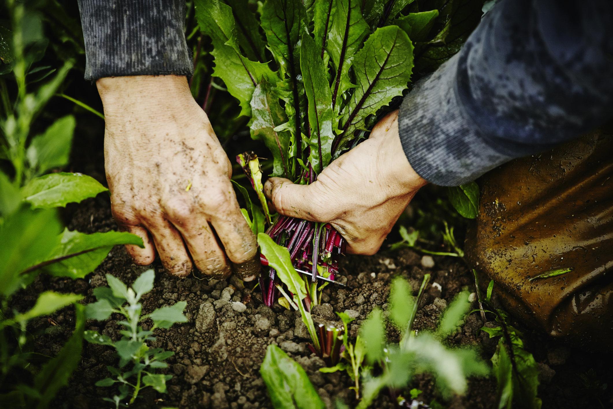 Mann berührt Pflanze, die in fast jedem Garten wächst – wenig später braucht er eine