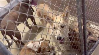 The Harris County Animal Shelter in Texas took in 200 dogs and cats over the Memorial Day weekend