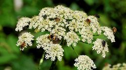 Man Left With Gruesome Leg Sores From Common Hogweed - Here's What You Need To