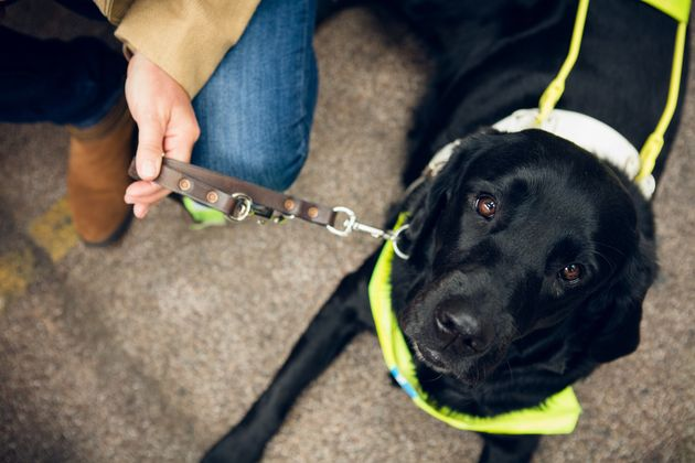 How To Help Guide Dogs And Their Owners Live Happy And Safe