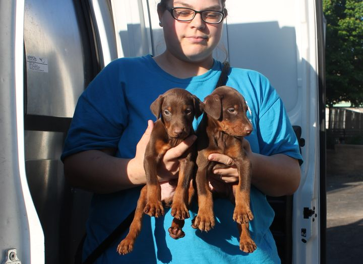 Two of the 10 puppies recovered from the alleged unlicensed dealer.