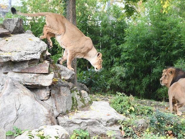 Τσάμπα κλειδαμπαρώθηκαν στα σπίτια τους στη Γερμανία. Λιοντάρια, τίγρεις και πούμα δεν απέδρασαν ποτέ...
