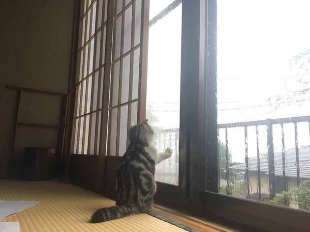 일본의 한 여관은 투숙기간 동안 고양이를