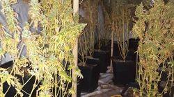 Εντοπίστηκε εργαστήριο καλλιέργειας δενδρυλλίων κάνναβης σε διαμέρισμα στην