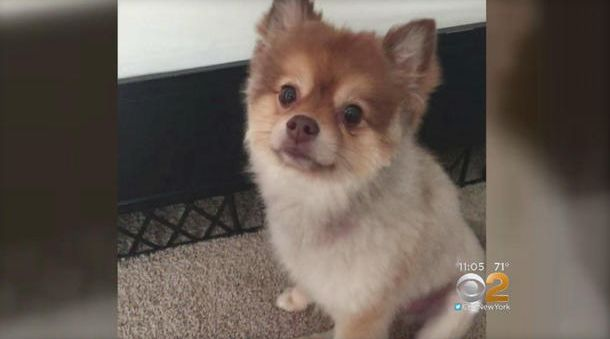 Dog Found Dead During Layover Between Delta