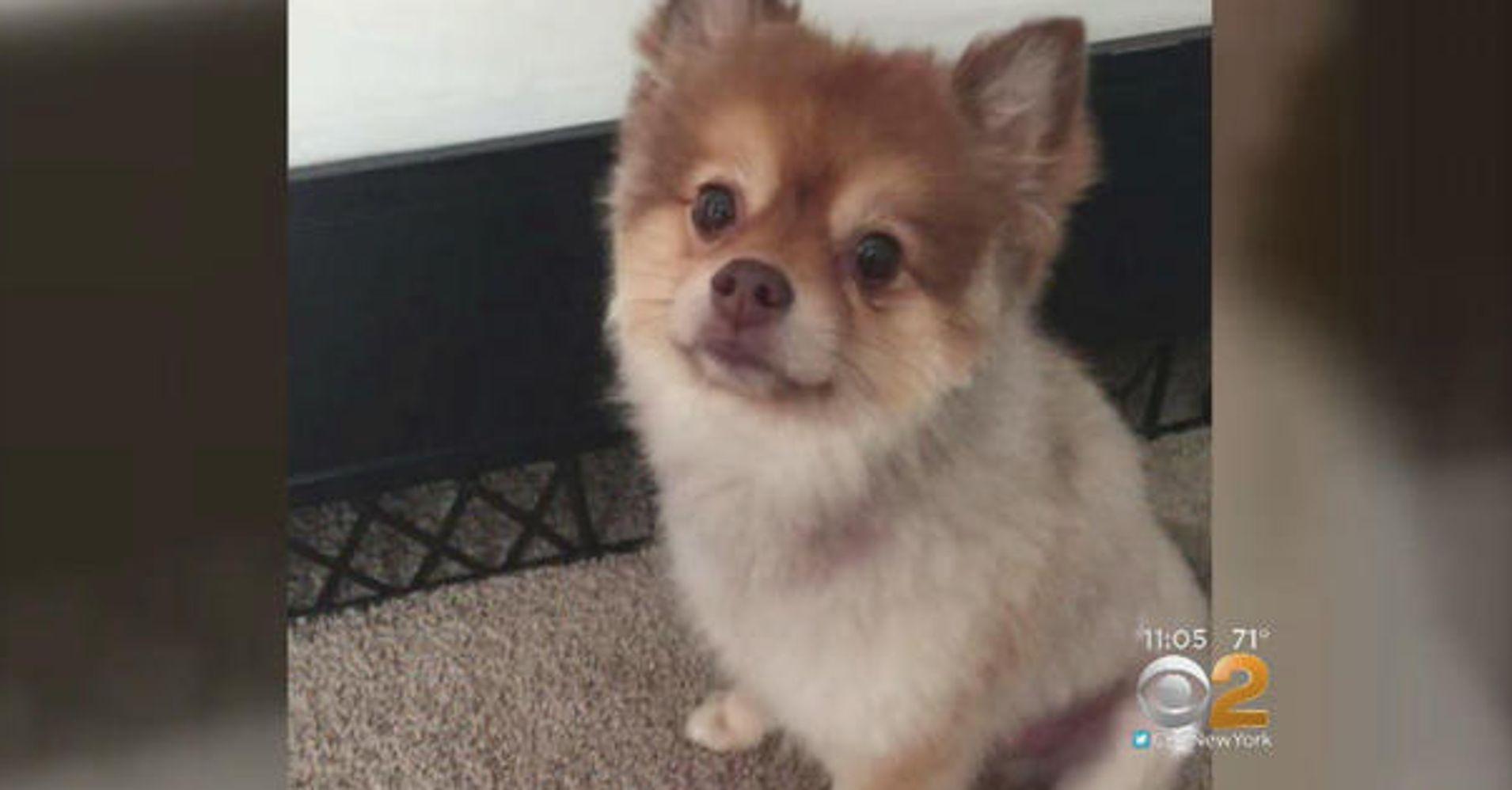 Dog Found Dead During Layover Between Delta Flights