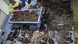 태국 당국이 비닐 80장을 삼키고 죽은 고래의 해부 장면을
