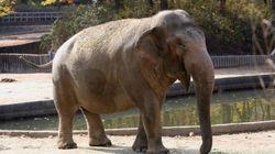 서울대공원에서 33년 간 사람들과 만난 코끼리가 세상을