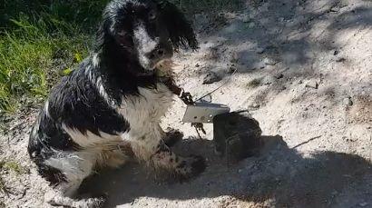 Unbekannter will seinen Hund ertränken – doch der Wille des Tieres siegt über die Grausamkeit