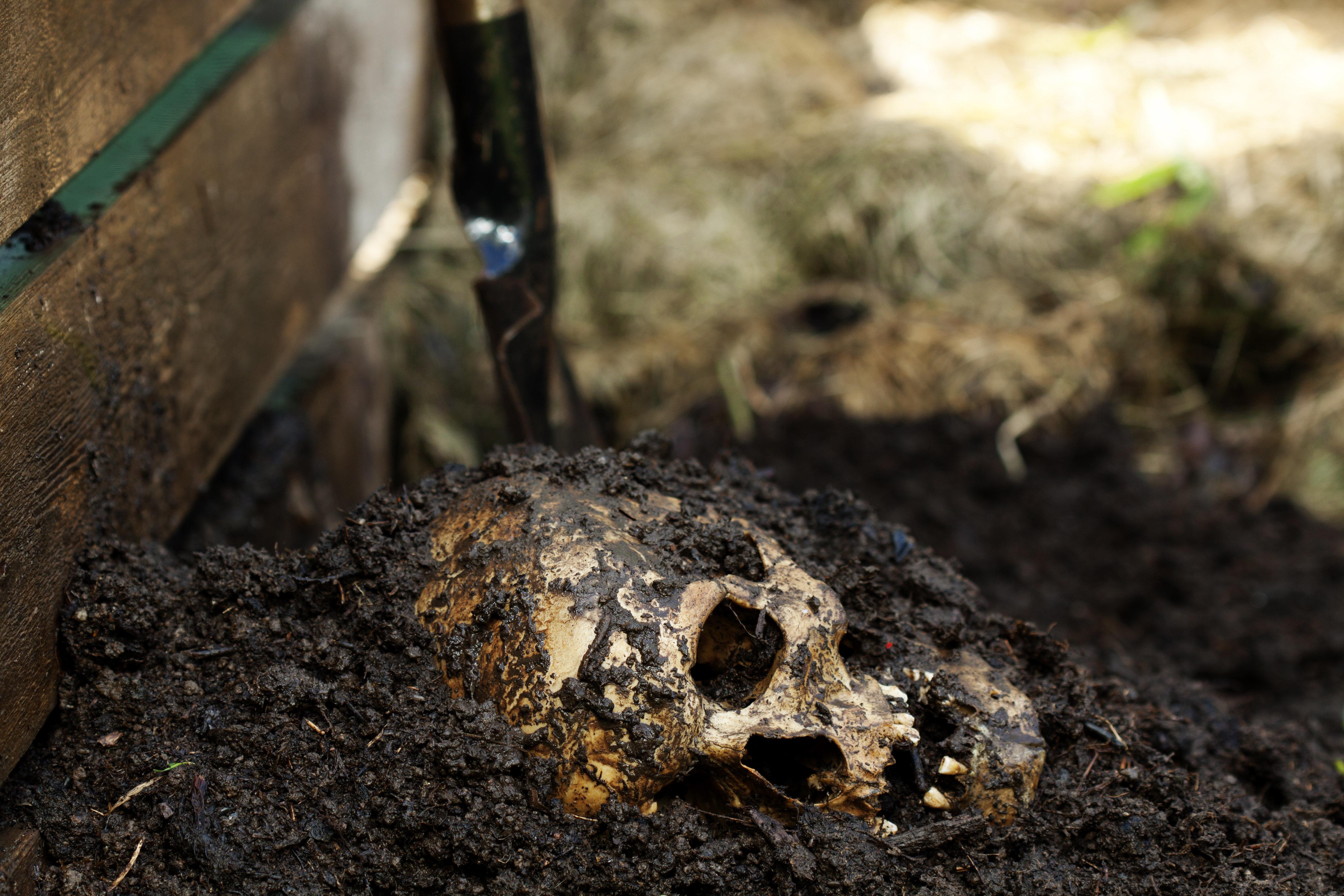 Mann gräbt im Garten menschlichen Schädel aus – die Reaktion seiner Frau macht fassungslos