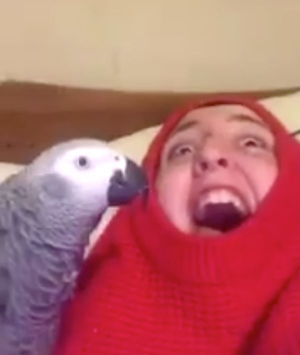 This Yorkshire Parrot And Its Owner Deserve Their Own Comedy