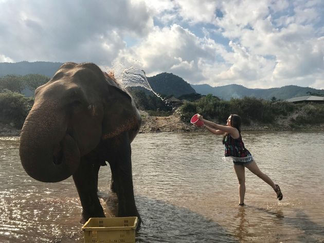 Visiting Elephant Nature Park in Chiang Mai,