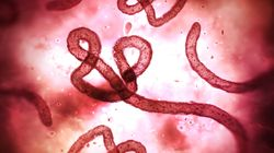 Trump Walks Back A Disastrous Ebola Funding Cut And Experts Sigh In