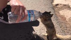 갈증이 심했던 그랜드 캐년 다람쥐가 관광객에게 물을