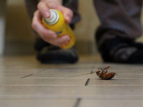 Να γιατί οι κατσαρίδες λατρεύουν να μπαίνουν στα ανθρώπινα