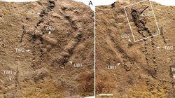 Les plus vieilles empreintes d'animaux ont été découvertes en Chine