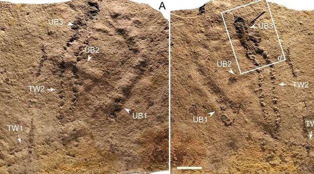 Les plus vieilles empreintes d'animaux ont été découvertes en