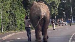 Deutsche Provinz: Autofahrer fährt durch Neuwied, als plötzlich ein Elefant aus dem Gebüsch