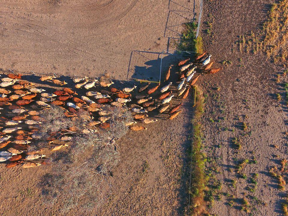 Unsere Landwirtschaft ist kaputt – und wir alle, Mensch, Tier und Umwelt, zahlen den