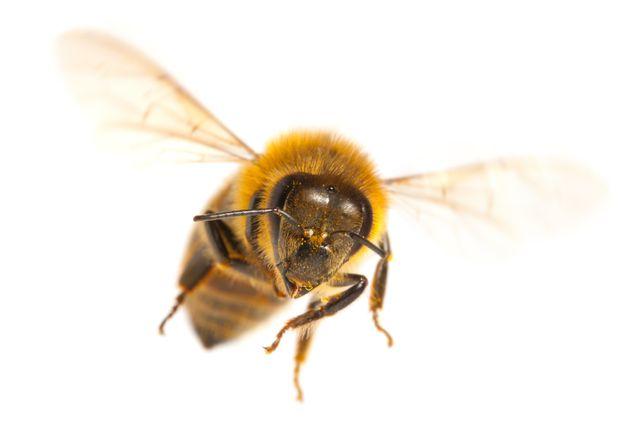 Οι μέλισσες καταλαβαίνουν το «μηδέν», το