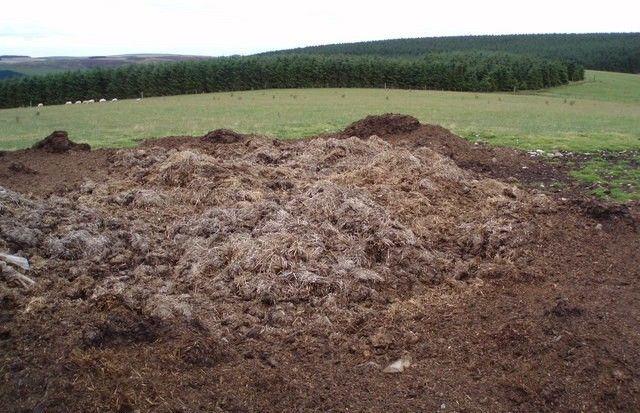 Pile of pig manure.