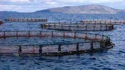 Tlemcen: réalisation prochaine d'une dizaine de fermes aquacoles à travers le