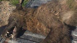 Σκύλος ή Λύκος; Εντοπίστηκε παράξενο ζώο που προκαλεί σάλο στην Πολιτεία της