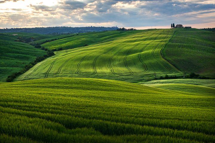 초록빛 융단을 깔아놓은 듯. 5월의 토스카나 대지의 색과 결은 정말 아름답습니다.