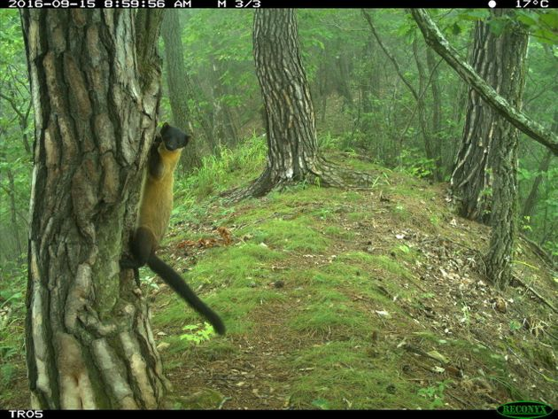 비무장지대와 민통선 이북 지역에 서식하는 멸종위기종