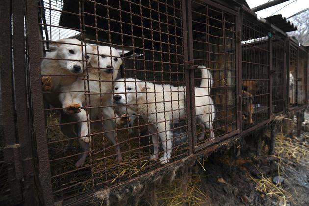 Aktivisten haben mehrere Hunde vor dem Tod gerettet. (Symbolbild)