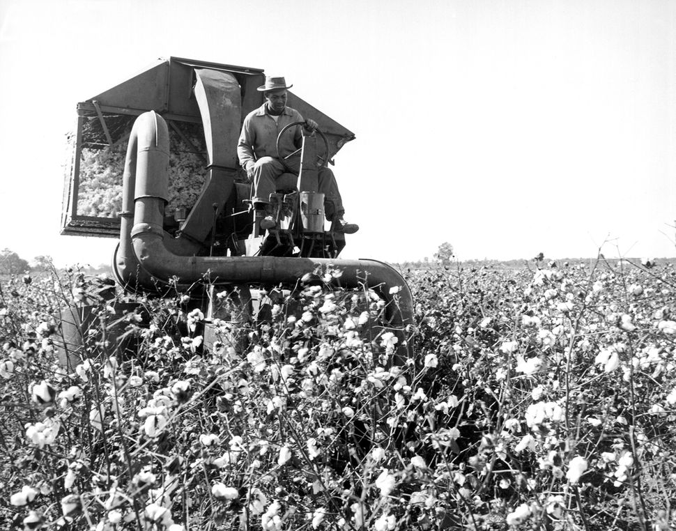 A farmer drives a mechanical picker through a cotton field in Scott, Mississippi, in June 1959. It could pick as much co