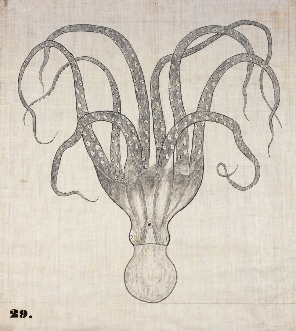 "One of Orra White Hitchcock's classroom charts, simply titled ""Octopus"" (1828–1840)."