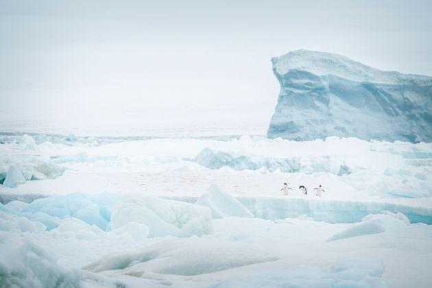 남극 얼음 녹는 속도가 3배 빨라졌고, 과학자들은 공포에