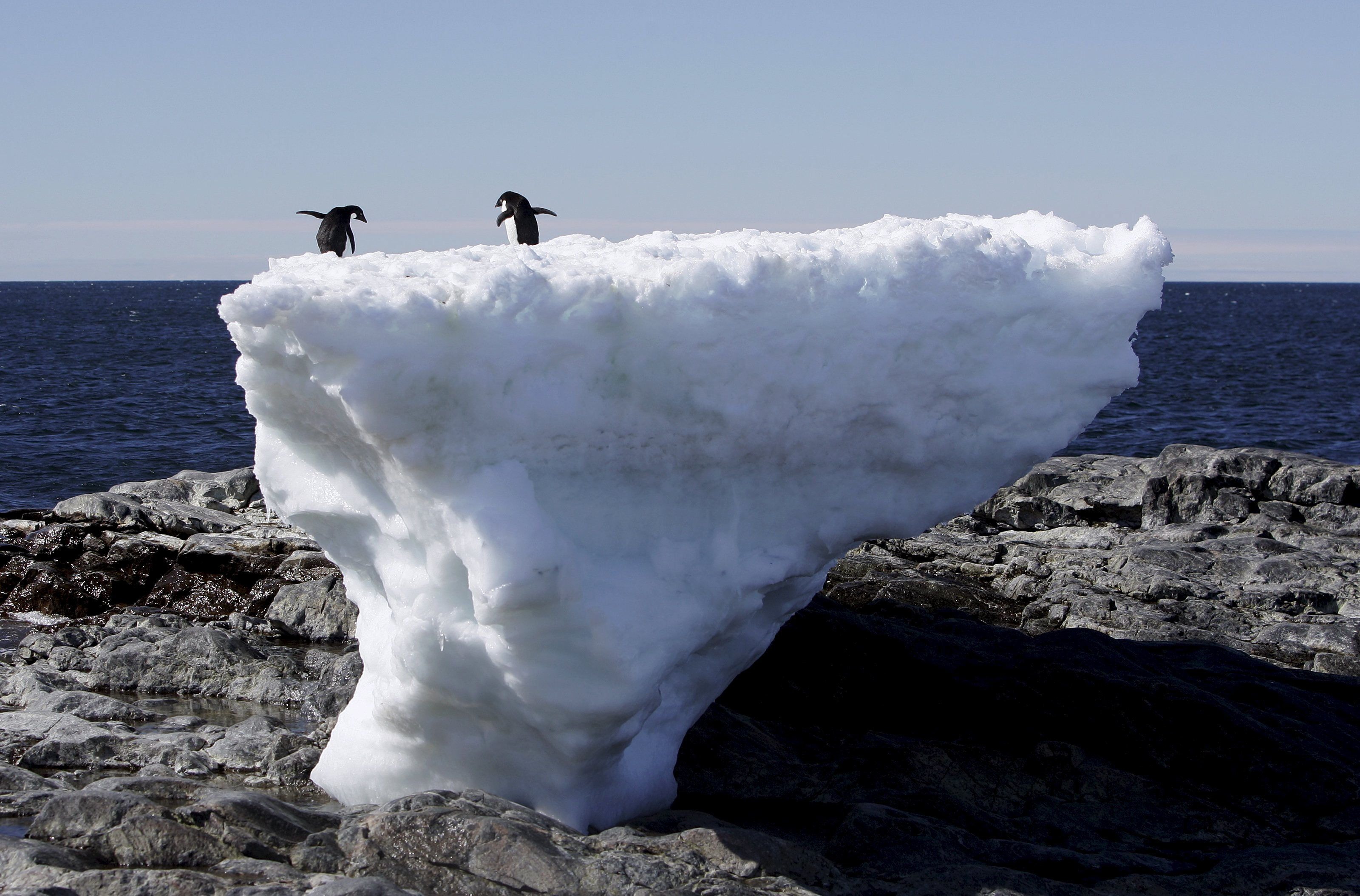 Two Adelie penguins stand atop a block of melting ice on a rocky shoreline at Cape Denison, Commonwealth Bay, in East Antarctica in this January 1, 2010 file photo.    REUTERS/Pauline Askin/Files